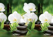 Кухонный фартук ПВХ Орхидея Белая