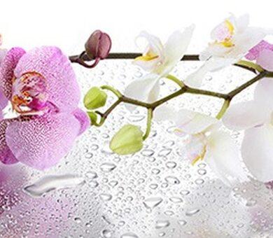 Кухонный фартук ХДФ Орхидея